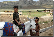 Two boys with a donkey